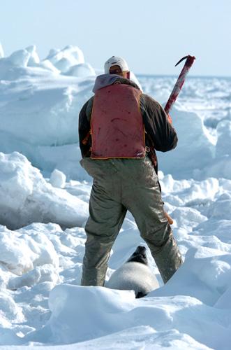 seal hunting 2411