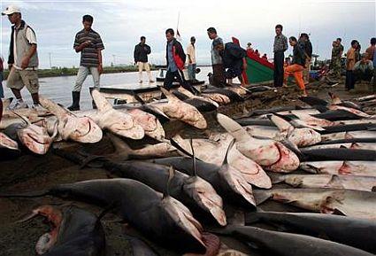 sharks for sale 45