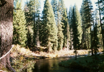 sierra trees dying faster due to warming