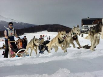 sledge dog race