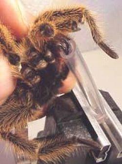spider venom 9