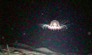 surprising sea animal2 9