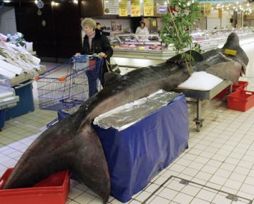 the fate of a basking shark 9