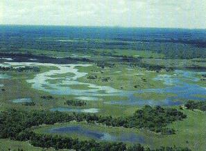 the pantanal wetlands