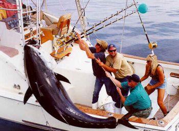 threatening the bluefin tuna 9