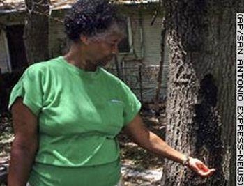 tree in her backyard