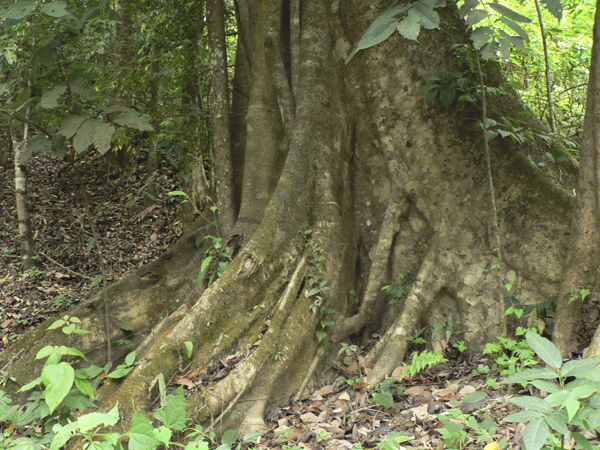 5 facts about rainforests you didn 39 t know green diary for 5 facts about soil