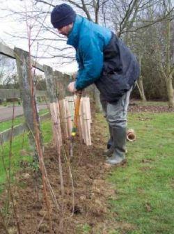 uk gardeners to plant trees 9