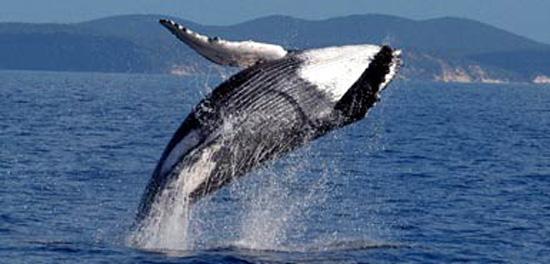whale Mqe9I 17620