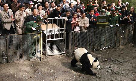 xiang xiang panda 246