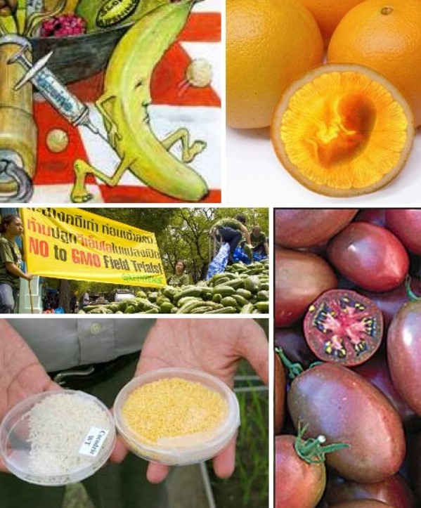 10 Genetically Modified Fruits And Vegetables Green