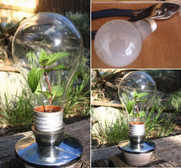 Make You Own Greenhouse Using Burned Out Incandescent