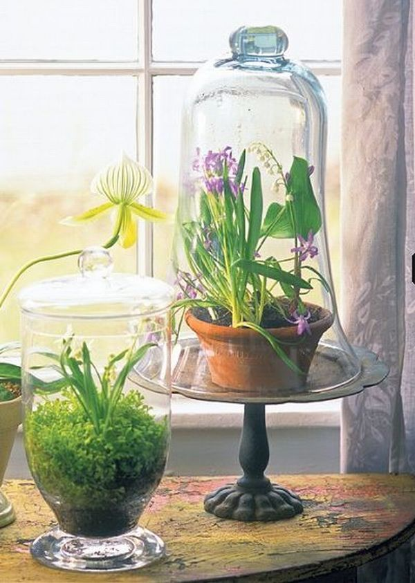 terrarium mini gardens encased in glass for wannabe. Black Bedroom Furniture Sets. Home Design Ideas