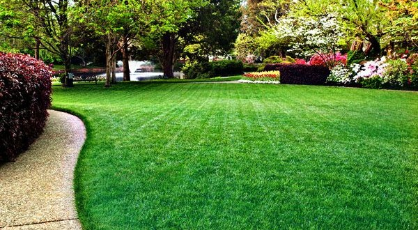 Tips to maintain a beautiful green grass lawn green for Pretty grass
