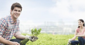 Growing grass and plants on the roofs of houses