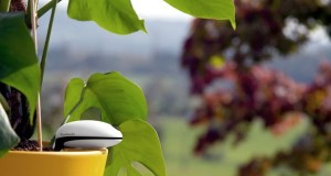 Koubachi Wi-Fi plant sensor_1