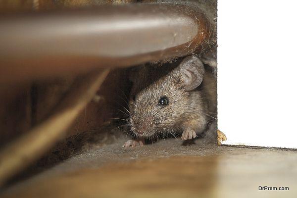 CONTROL RATS AT HOME