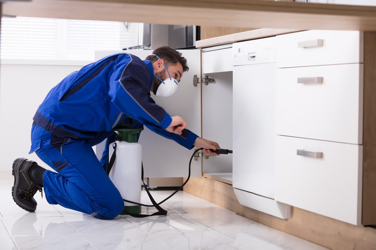 Image result for How Commercial Pest Control Service Can Help You?
